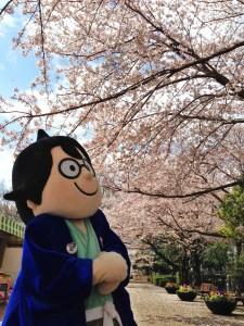 20140406船えもんと桜(花と緑のフェア、アンデルセン公園)